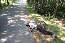 si v Domažlicích vybral čtyřiapadesátiletý občan Slovenské republiky, který si neváhal ustlat v těsné blízkosti bývalé tankové cesty pod benzinovou pumpou v Kozinově ulici.