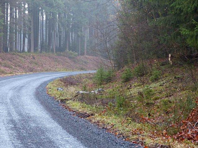 Lesní silnice z Babylonu do Pece pod Čerchovem.
