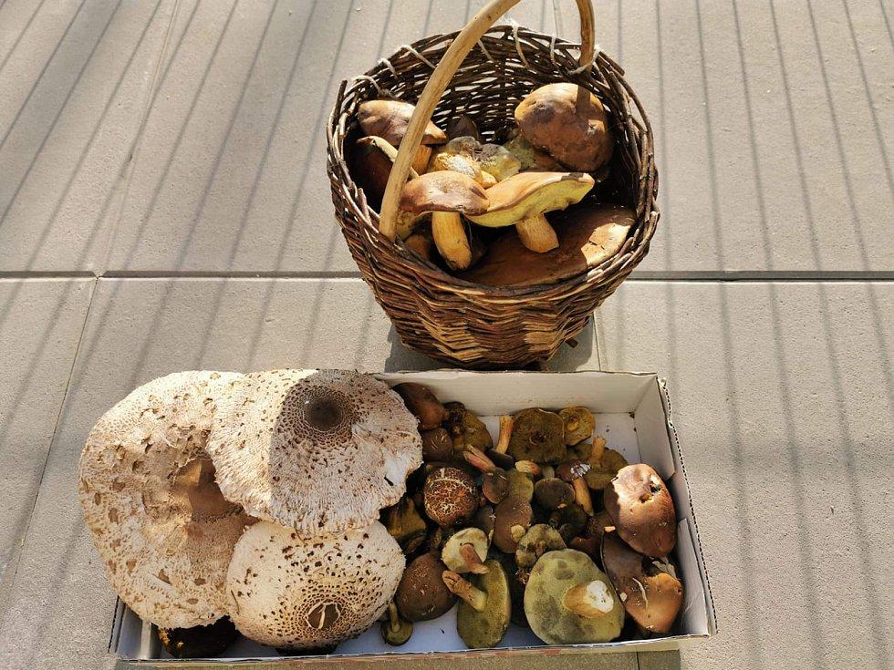 Nalezené houby zaslali: Miruš Sklenářová