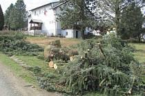 Velkým kácením byla odstartována revitalizace zeleně v Chodské Lhotě