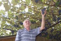 Sisekovi z Trhanova vypěstovali dva metráky hroznů.