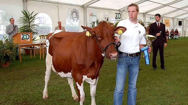 Vítězná staňkovská prvotelka, v pozadí vpravo pak maďarský bonitér, který krávy hodnotil, u mikrofonu za pultíkem vlevo Václav Šaloun z Inseminy, která se podílela s ZOD Mrákov na pořadatelství.