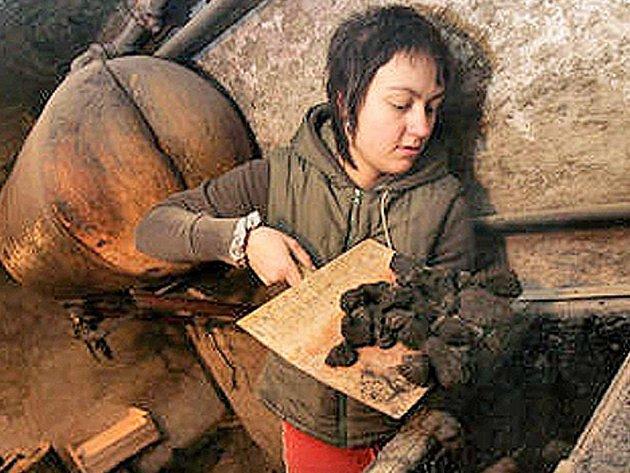 Lidé se vracejí k topení tuhými palivy, jako jsou uhlí a dřevo.