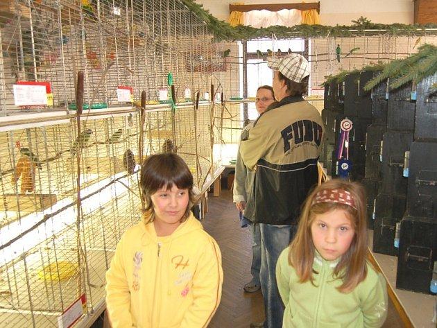 Na Okresní výstavě exotického ptactva v Pařezově mohli návštěvníci zhlédnout sto devadesát devět exponátů od devatenácti chovatelů