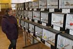 Krajská výstava okrasného ptactva ve Starém Klíčově se letos konala již poosmé.
