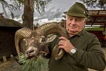 Petr Šefčík, myslivec z Osvračína, ukazuje hlavu přejetého muflona.