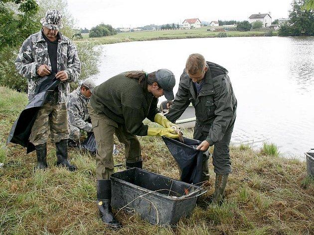Úhyn ryb na rybníku v Luženicích.