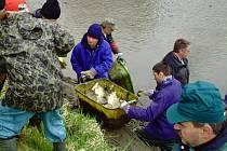 Z činnosti rybářského kroužku v Hostouni.