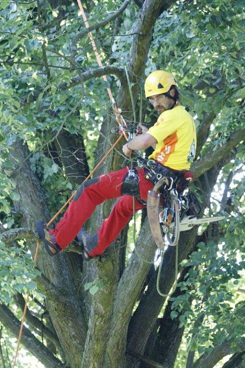 Arboristé ošetřili Kozinovu lípu.
