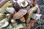 Nalezené houby zaslali: Olga Hálová