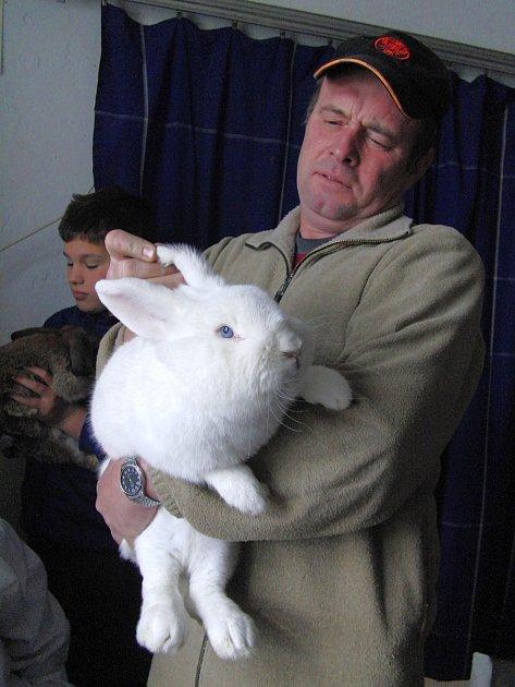 Z JEDNÉ Z PŘEDCHOZÍCH POSTŘEKOVSKÝCH VÝSTAV. Na snímku předseda ZO ČSCH Postřekov Jiří Královec s nádherným králičím ´exponátem´.