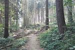 Kůrovcem zasažené jsou stromy od Klenčí pod Čerchovem až po výhledy, včetně Baarovy stezky.