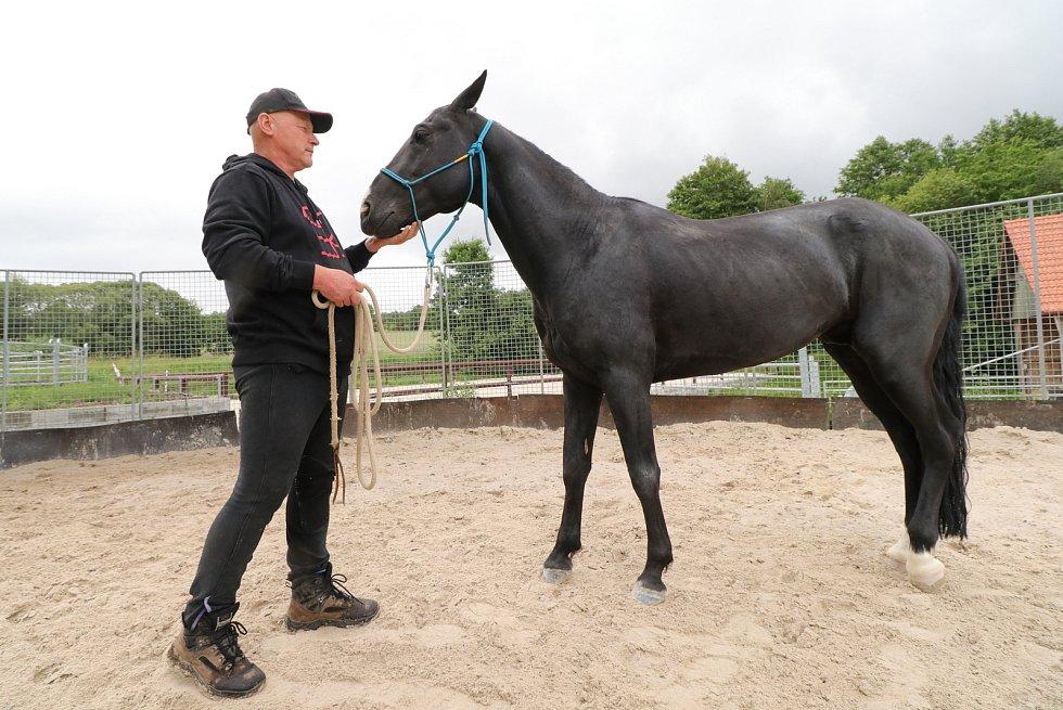 Zachránili koně před utracením na Kavkaze, nyní žijí pod Sedmihořím