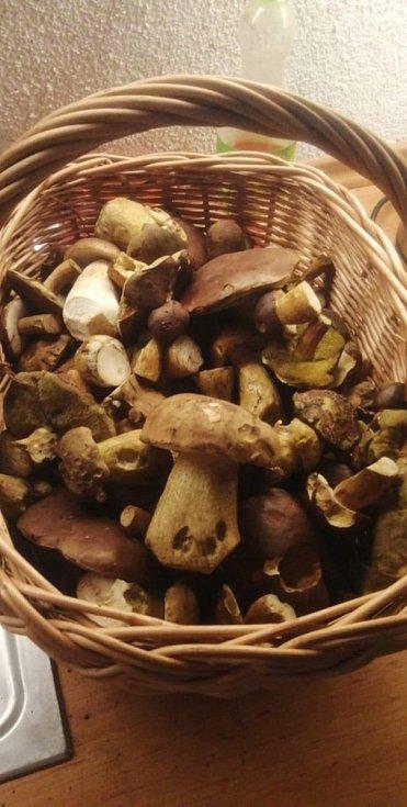 Nalezené houby zaslali: Gabriella Švachová