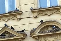 DŮM ČP. 76 V ULICI MSGRE B. STAŠKA se tváří, jako by patřil výhradně holubům.