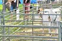 V Horšovském Týně bylo mimo jiné k vidění i jednatřicet ovcí s jehňaty. Nechyběla ani malá kůzlátka.