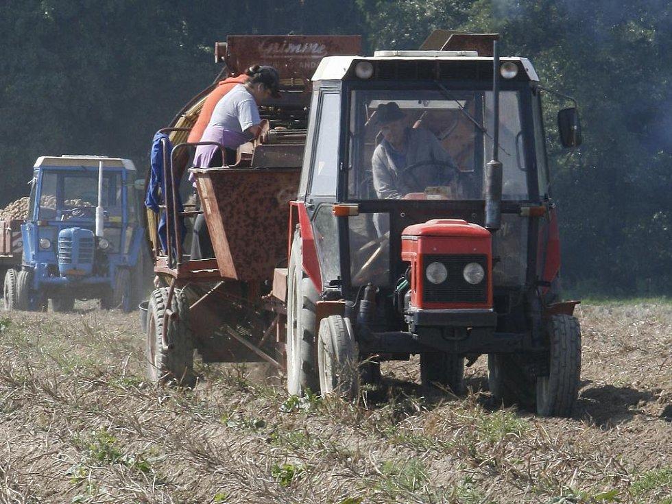 Ledoví muži napáchali letos převážně škodu na bramborách a kukuřici. Jaká bude  úroda ukáže čas.