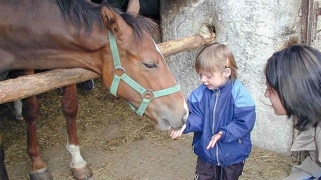 Dětem se u koníčků moc líbí.