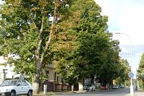 LIPOVÁ ALEJ v Kozinově ulici bude vykácena.