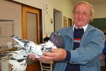 Jaroslav Polák, který byl vystavovatelem i vedoucím expozice Okresní výstavy holubů ve Kdyni, nám předvedl svého šampiona. Je to Hanácký voláč s  rousy (péry) na nohách. Když holub stojí, rousy se mu roztáhnou do nádherného vějířku.
