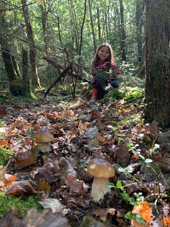 Nalezené houby zaslali: Antonín Ferko
