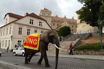 Do cirkusu zvala v Horšovském Týně slonice Tembo.