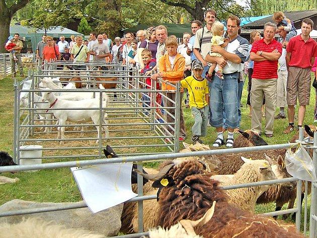 Ovce z Valašska včetně vzácné ´černé´ (hnědé), budily zaslouženou pozornost návštěvníků. Vedle nich i kozy a také koně ze Sluneční osady Krchleby