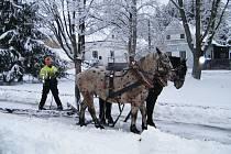 Jiří Foist chová koně plemene Slezský norik. Účastní se soutěží, používá je na práci v lese, při orbě a i při prohrnování sněhu.