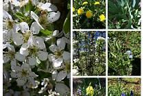 Květy na zahradě v Blížejově.