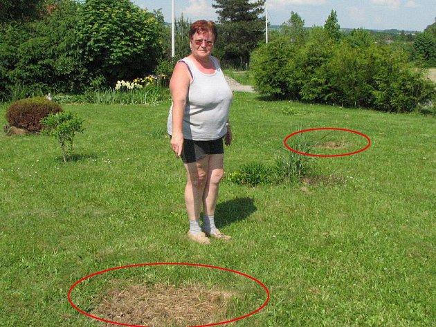 TADY KRADLI! Alena Ševčíková ukazuje na místa (označena červeně), odkud zmizely kvetoucí azalky