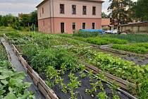V Meclově se pracuje i na zahradě.