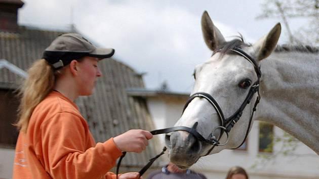Koňská farma ve Svržně na Poběžovicku ožije další akcí.