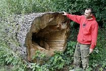 Zdeňku Zrůstovi se na poslední chvíli podařilo zachránit před rozřezáním mohutný kmen vrby, který bude základním materiálem pro sochaře na letošním sympoziu.