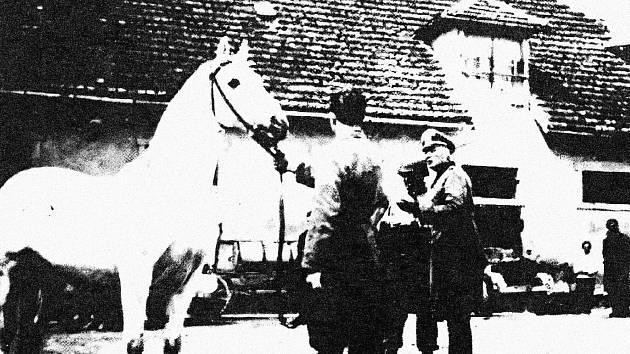 V květnu 1945 zachránili američtí vojáci z hřebčína v Hostouni stovky vzácných koní. Událost vešla do dějin jako Operace Kovboj.