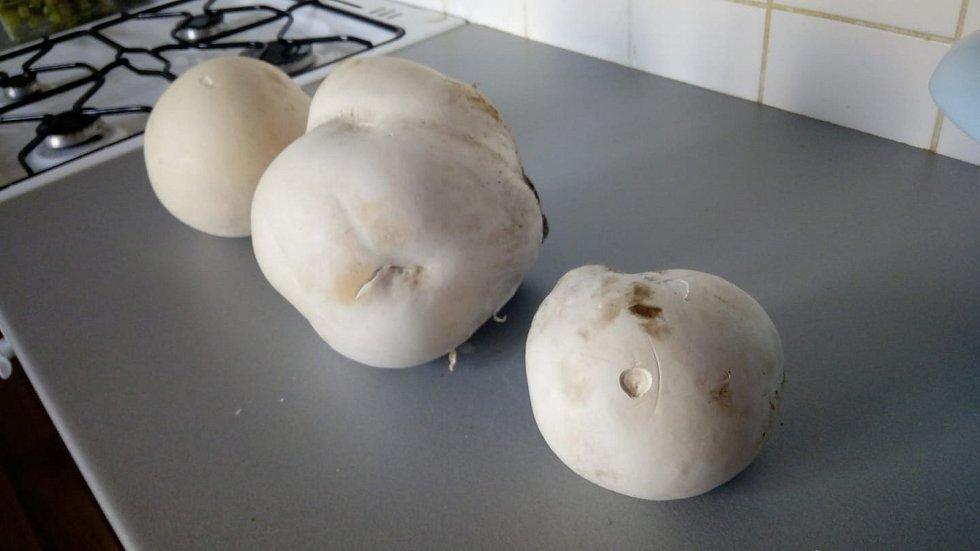 Nalezené houby zaslali: Wendy Kisová
