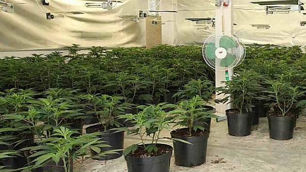 Podobnoui pěstírnu drogy odhalili dnes v Semošicích u Horšovského Týna.