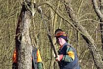 SILNIČÁŘI SE ČINILI. V minulém týdnu prováděli prořezávku stromů a odstraňovali větve zasahující do silnice II/189 mezi Draženovem a Klenčím.