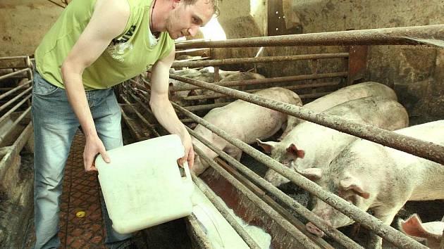 Zoufalá situace zemědělců se táhne měsíce. V červnu 2008 takto na protest vylévali mléko prasatům.