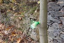 Pobořená zeď v parku. V popředí pachový ohradník.