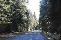 Rozbitá lesní silnice. Ilustrační foto.