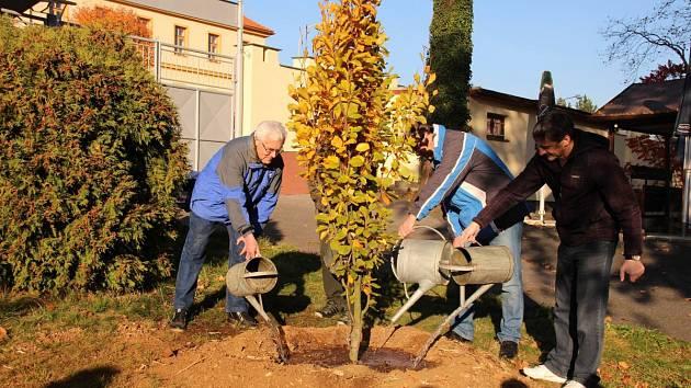 Výsadba stromu v letním kině v Domažlicích.