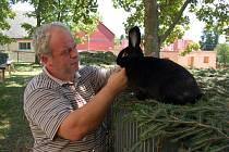 JOSEF BURŠÍK na jedné z předchozích poběžovických výstav představil nejhezčí exempláře králíků.