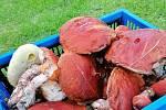 Nalezené houby zaslali: Lenka Svagrová