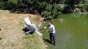Ryby neměly dostatek kyslíku ve vodě.