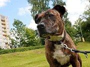 Domažlická vyhláška stanovuje povinnost mít psa uvázaného na vodítku na veřejných prostranstvích.