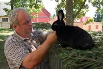 VÍTĚZ – CHLUPÁČ. Josef Buršík představuje vítěze poběžovické výstavy-králíka Tomáše Fialy z H.Týna.