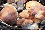Nalezené houby zaslali: Zdenka Sellnarová