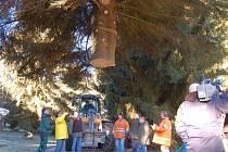 Z kácení vánočního stromu pro Vatikán na místě zaniklé obce Bystřice u česko-bavorské hranice.