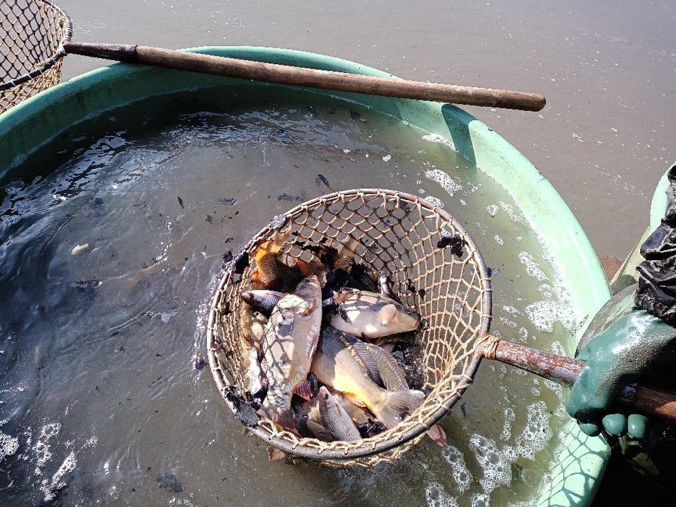 Rybáři z rybníka v Babyloně vytáhli zhruba pět metráků ryb.