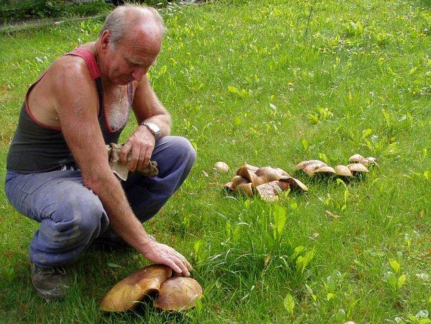 Jan Etzl ukazuje chodovskou raritu - houby každoročně rostoucí přímo na návsi.